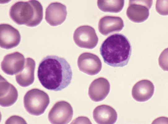 Where Do T Lymphocytes Mature