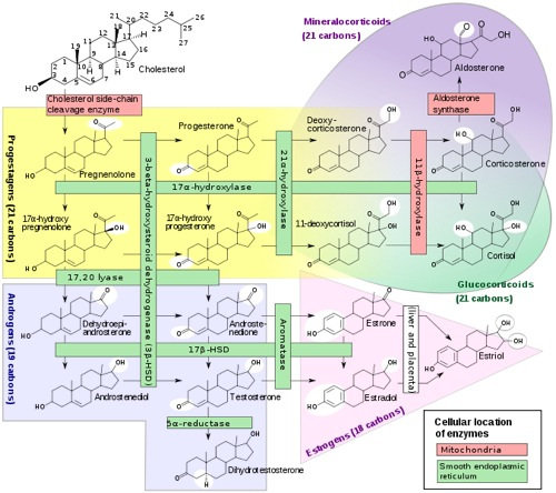 phytoecdysteroids and anabolic-androgenic steroids-structure and effects on humans
